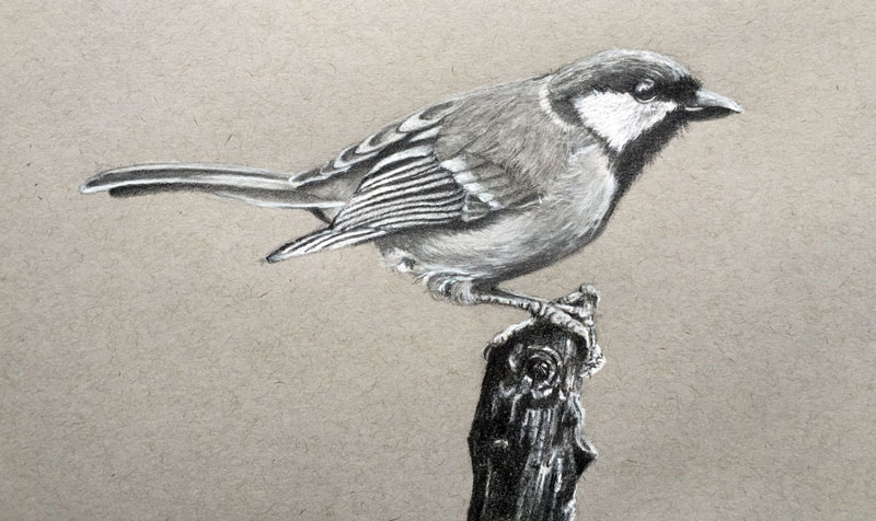 How to Draw a Realistic Bird with Graphite and Charcoal