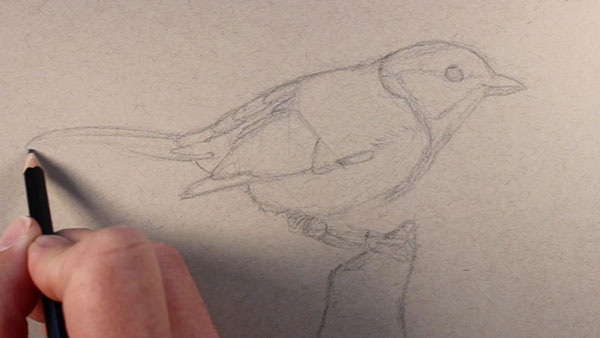 Draw the basic shapes of the bird