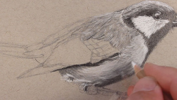 Drawing the texture of the lower portion of the bird