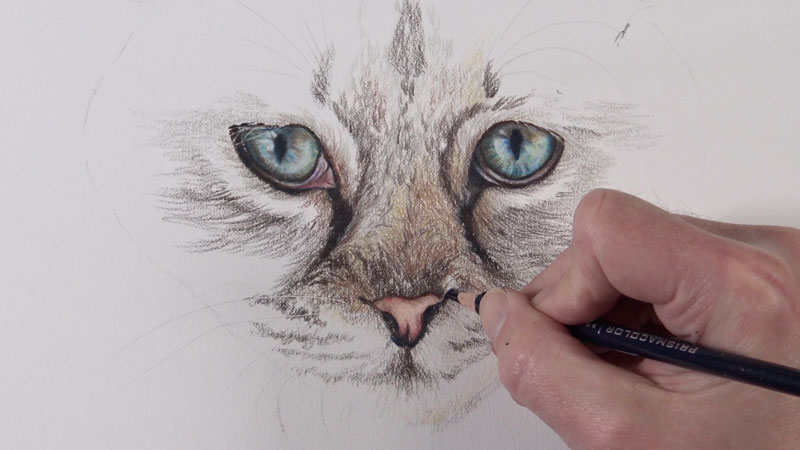 Drawing the cat's nose