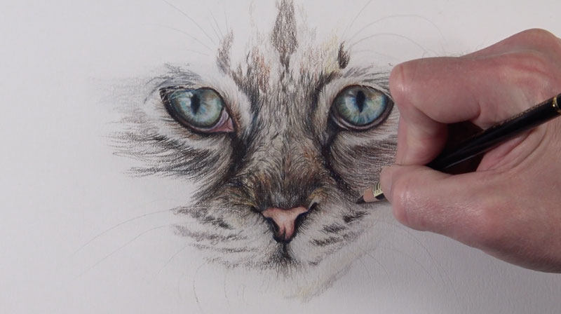 Creating the texture of fur with an oil-based colored pencil
