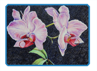 Colored Pencil Orchid Demonstration