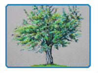 Colored Pencil Tree