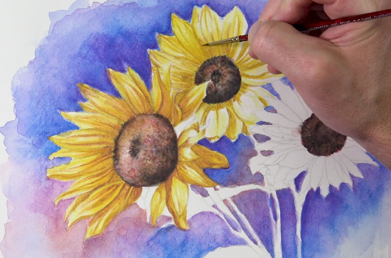 Adding color to the sunflower petals with watercolor pencils