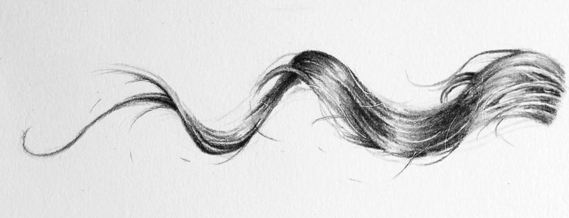 Drawing of a strand of hair