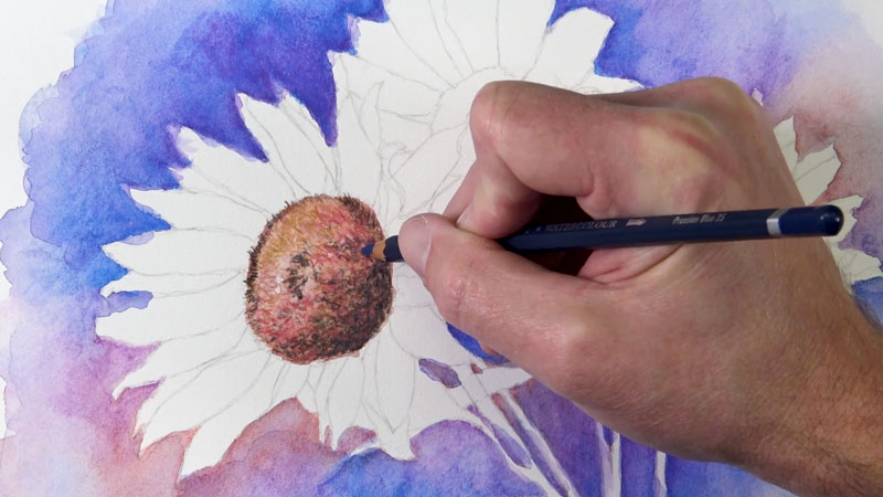 Drawing the center of a sunflower with watercolor pencils