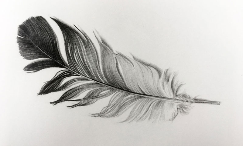 how to draw a feather. Black Bedroom Furniture Sets. Home Design Ideas