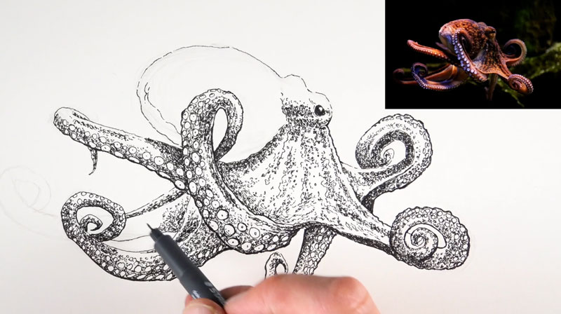 Line Quality In Art : Line and wash lesson octopus