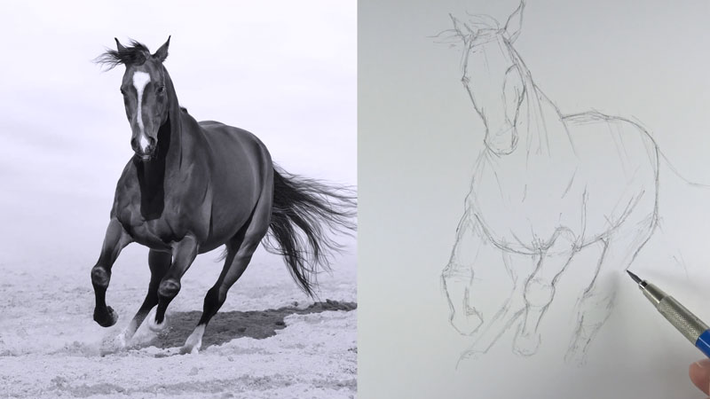 Drawing the outlines of the horse