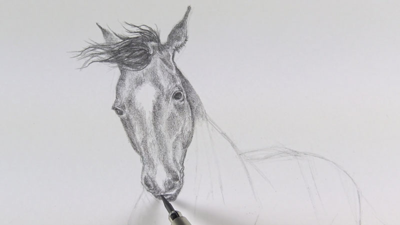 Shading the head of the horse