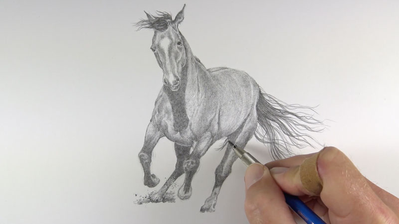 Drawing the tail of the horse