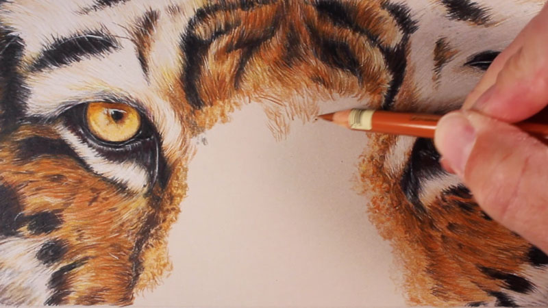 Draw a Tiger with Colored Pencils - photo#32