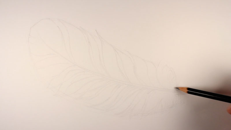 Drawing the smaller shapes of the feather