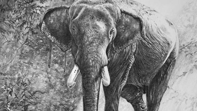 How to Draw an Elephant with pencil