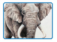 How to draw an elephant with colored pencils