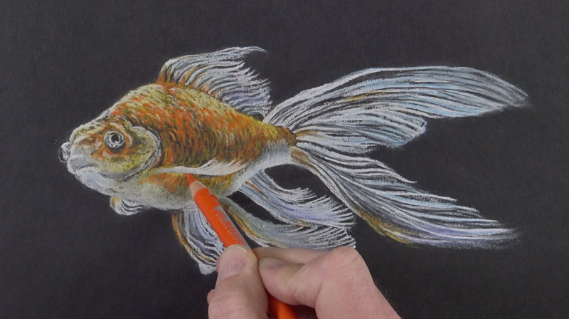 Drawing in final details and increasing intensity of color with pastel pencils