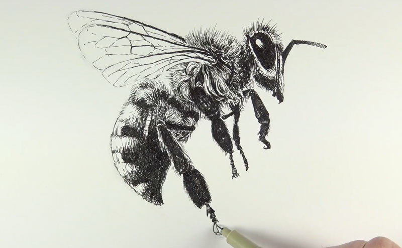 Drawing the legs of the bee