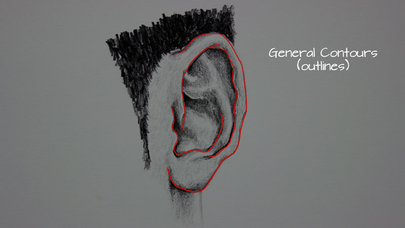 Drawing the outlines of the ear