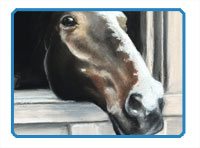 How to Draw a Horse with Pastels