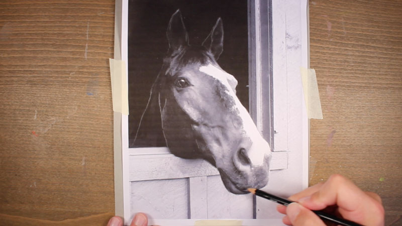 Draw a Horse Transfer