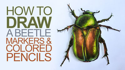 How to Draw a Beetle with Colored Pencils and Markers