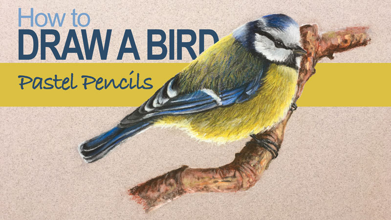 How to Draw a Bird - Pastel Pencils