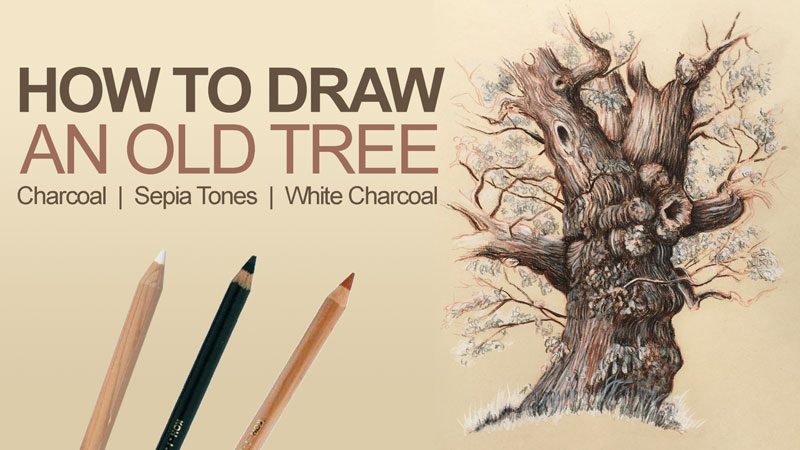 How to Draw an Old Tree