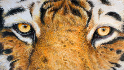 How to draw a tiger with colored pencils