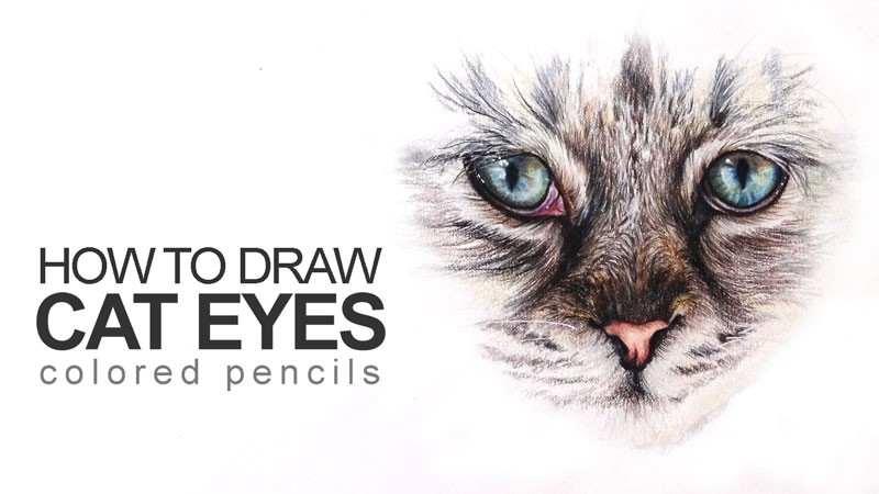 how to draw cat with colored pencils