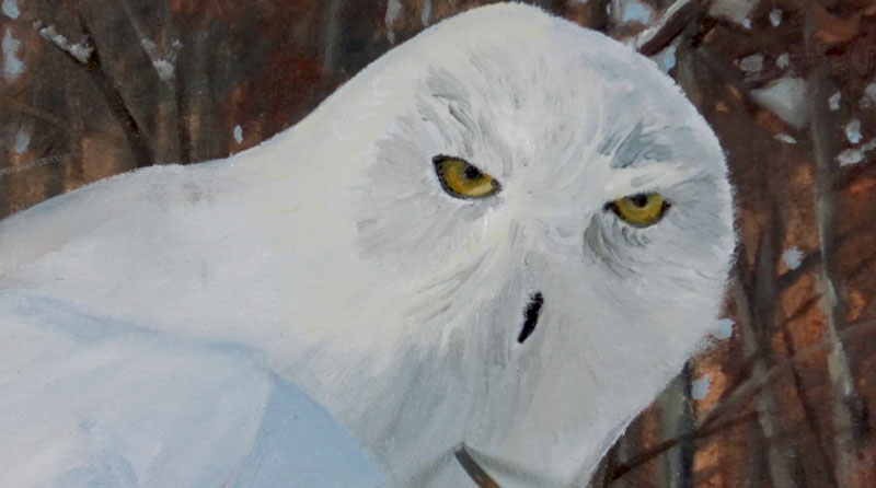 Painting the Details of the Face of the Owl
