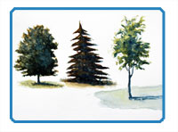 Paint Trees with Watercolor Header