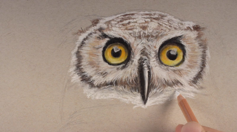 Pastel pencils how to draw an owl for Owl beak drawing