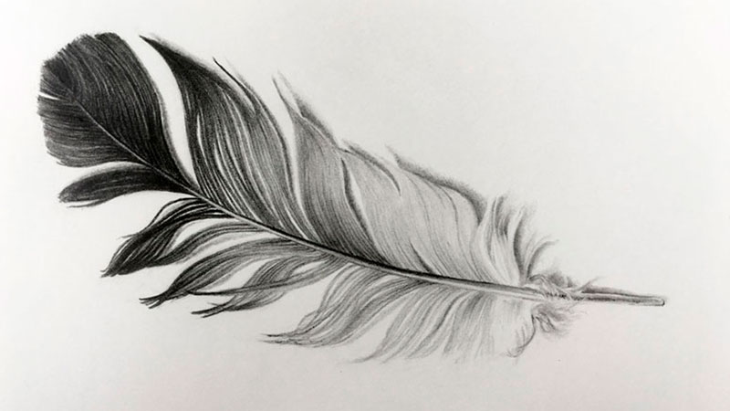 Featured Pencil Drawing Lesson