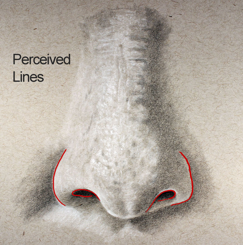Lines of the nose