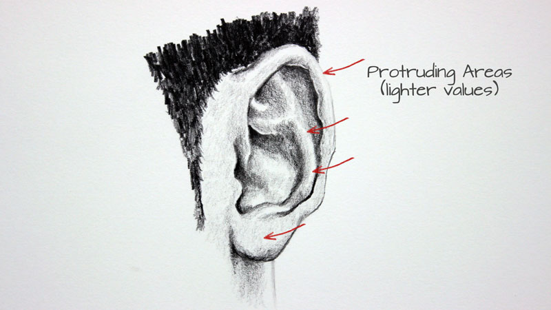 Protruding areas on the ear