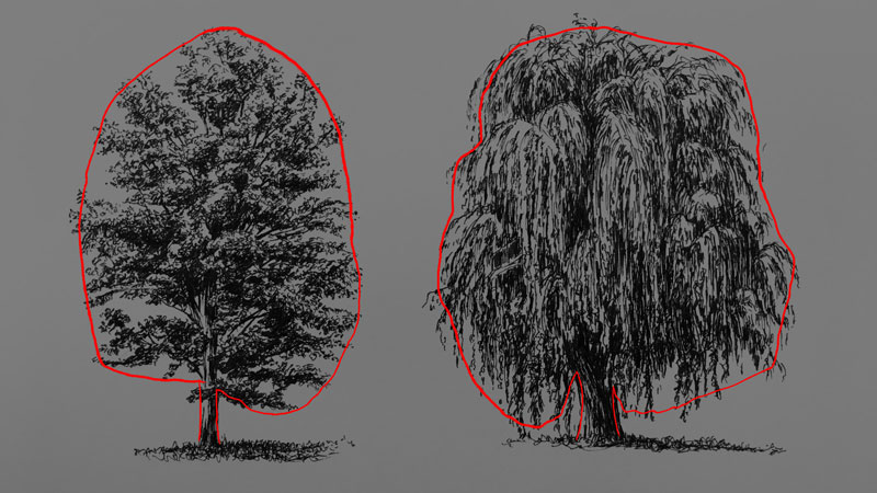 Draw the basic shape of the tree