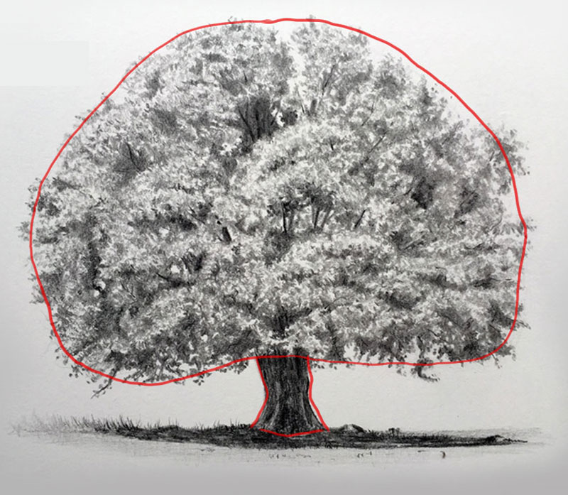 Draw the shape of the contours of the tree