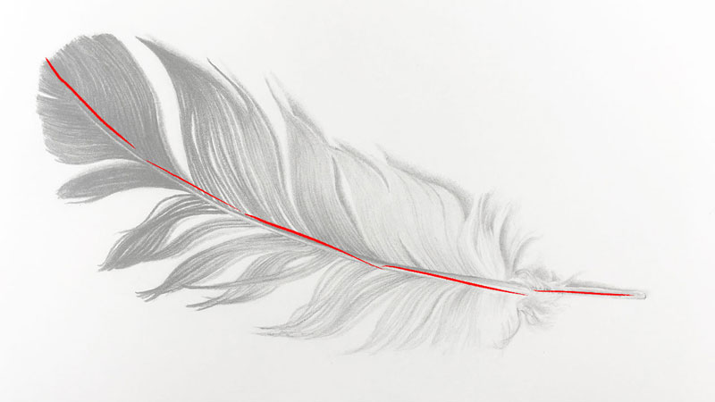 Line Drawing Feather : How to draw a feather