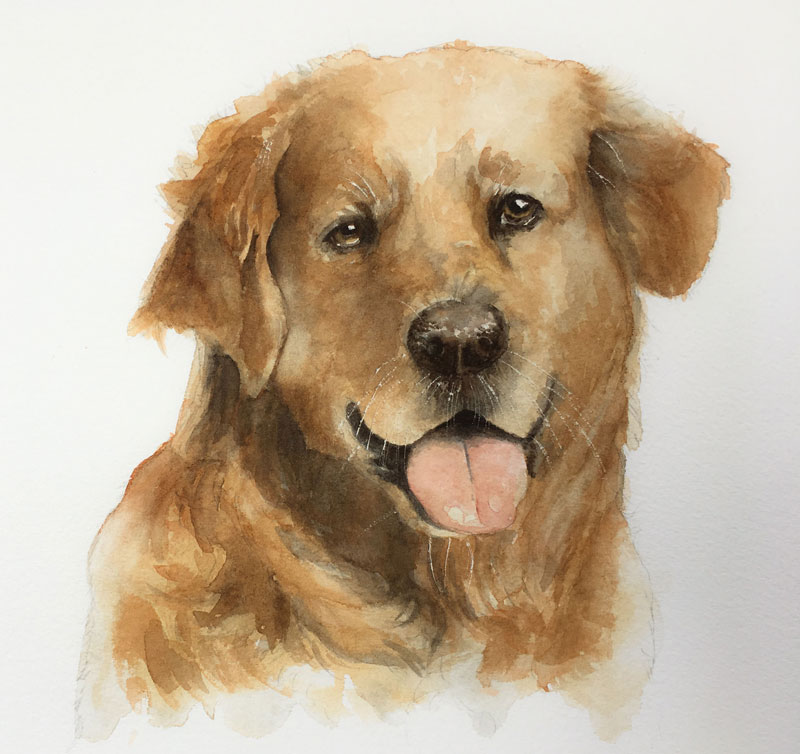 Watercolor Painting of a Dog