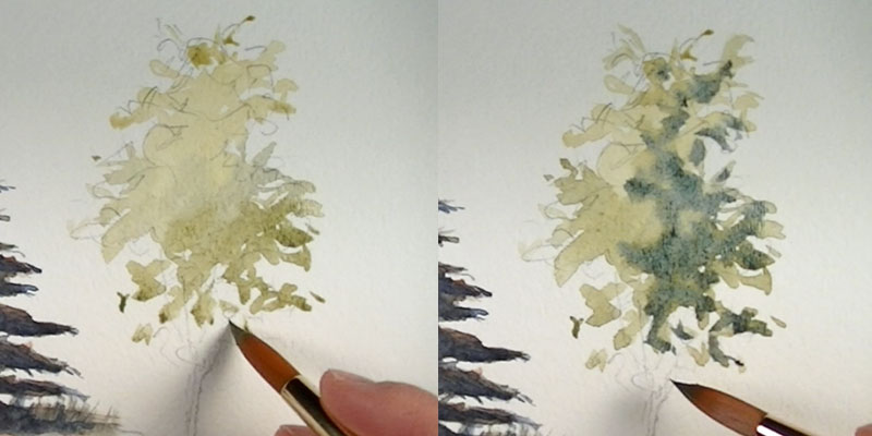 Paint a leafy tree - intial washes