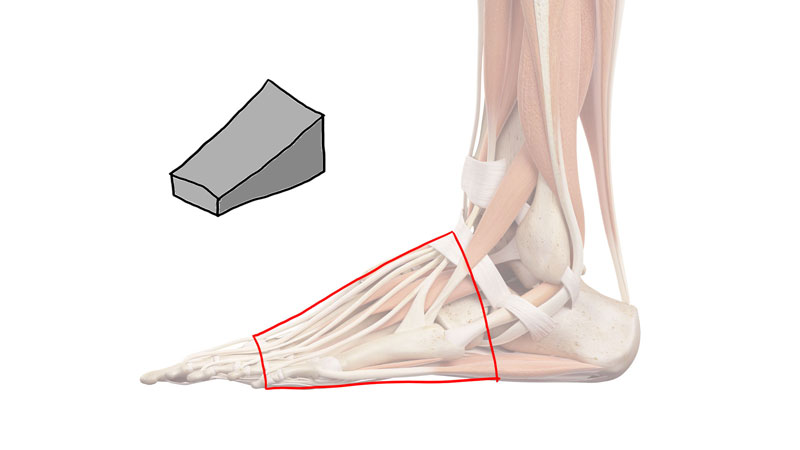 The wedge form of the foot
