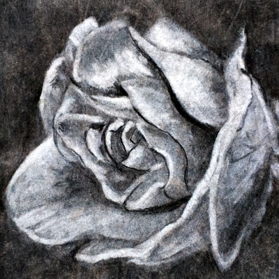 Charcoal Rendering Rose