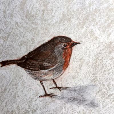 Conté Bird