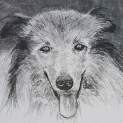 Graphite Dog Portrait