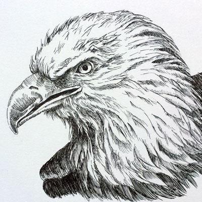 Pen and Ink Eagle