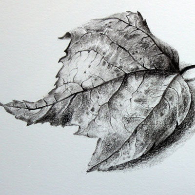 Realistic Textures Leaf