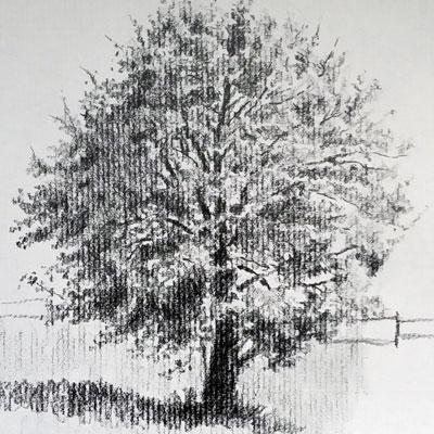 Graphite Tree
