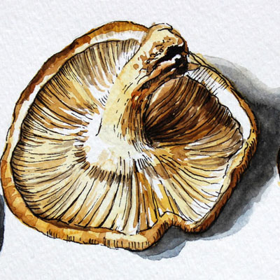 Watercolor & Ink Mushrooms