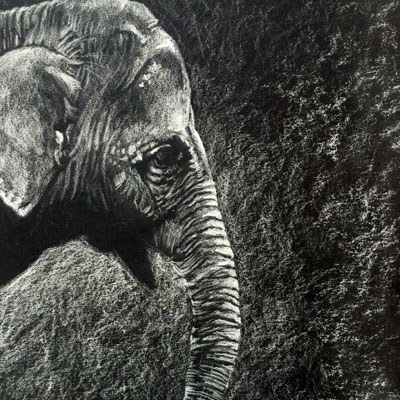 White Charcoal Elephant