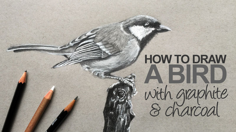 How to Draw a Bird with Graphite and White Charcoal